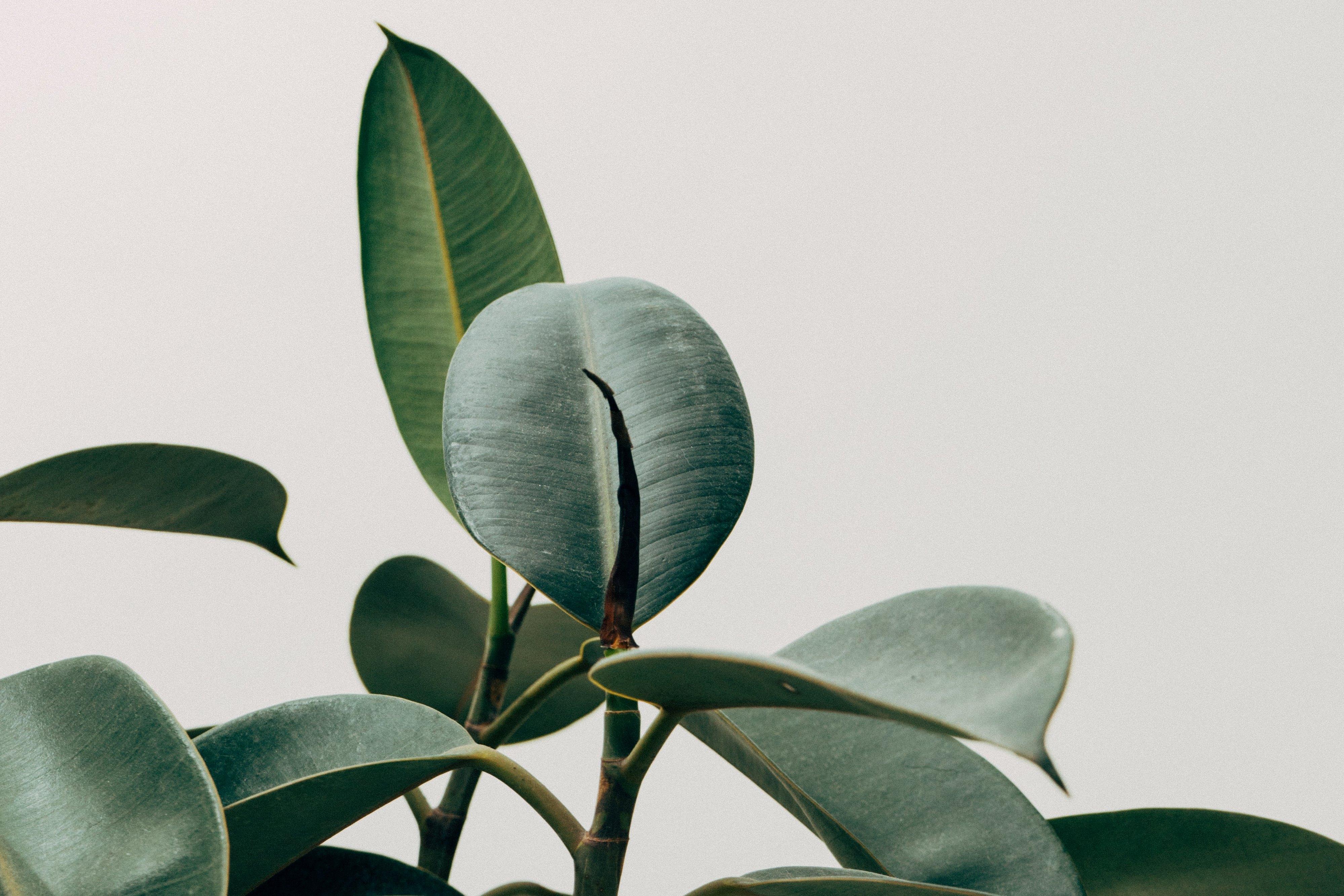 De 10 lessen die ik van Marie Kondo leerde
