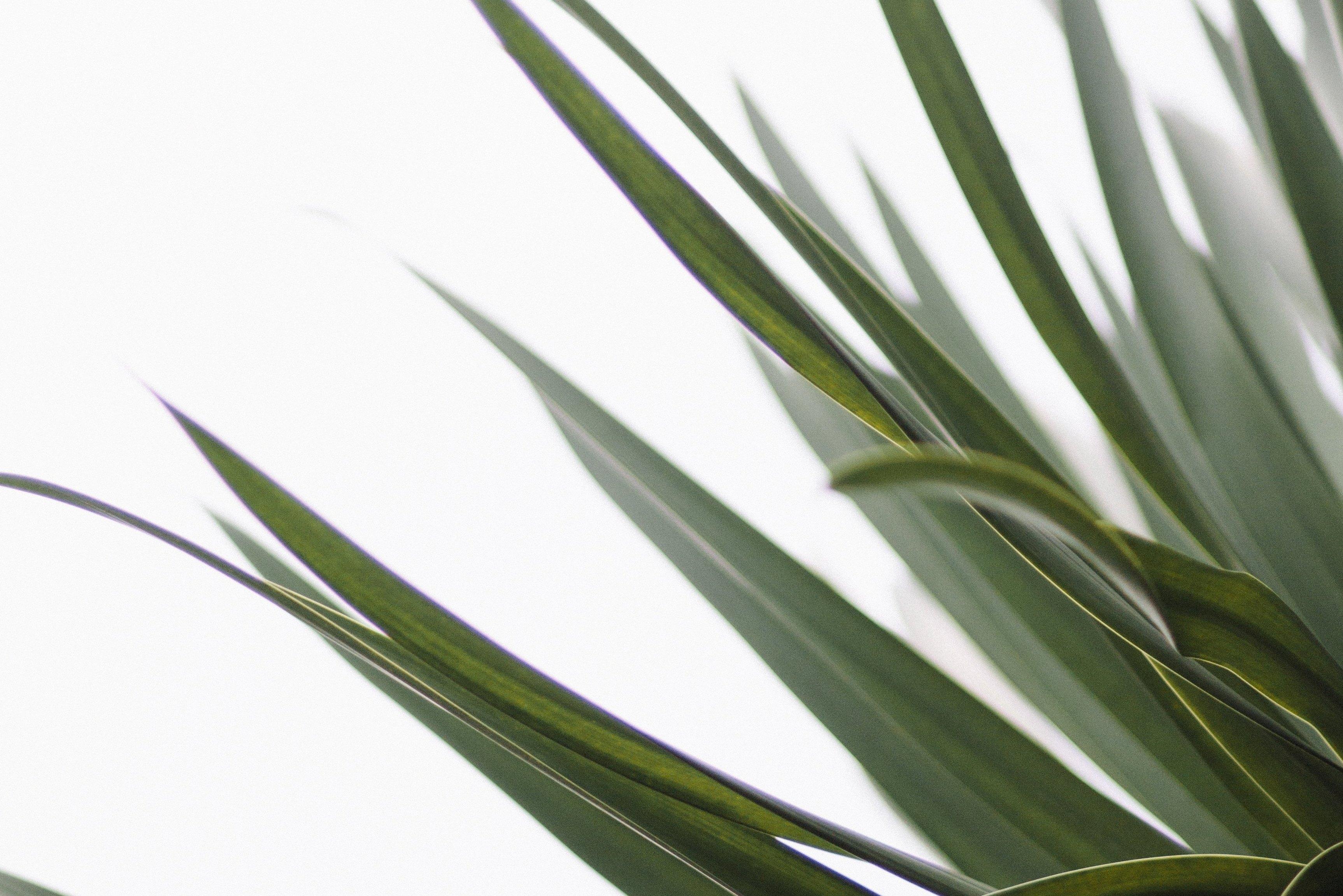 De rust van opruimen: 3 tips van een minimalist